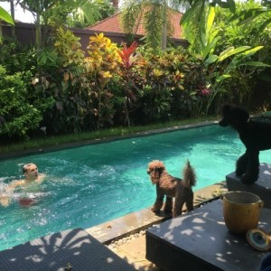 Housesitter Stephen loves swiming and the dogs always go crazy
