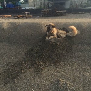 Housesitter gets great photot opp with Buster our fav stray pup, who loves to lay in big holes.