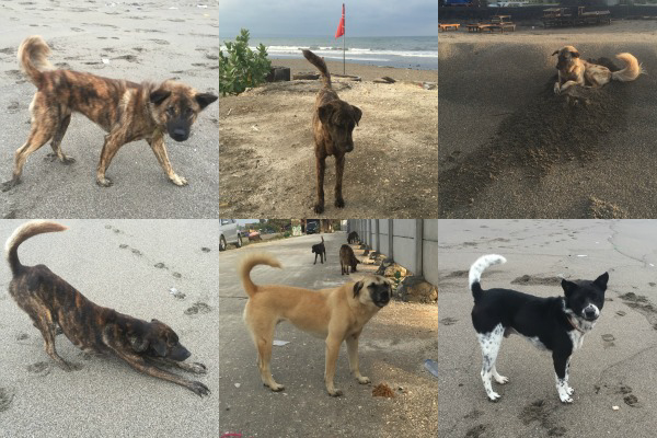 Traveling-House-Sitters-Stray-Pups-01